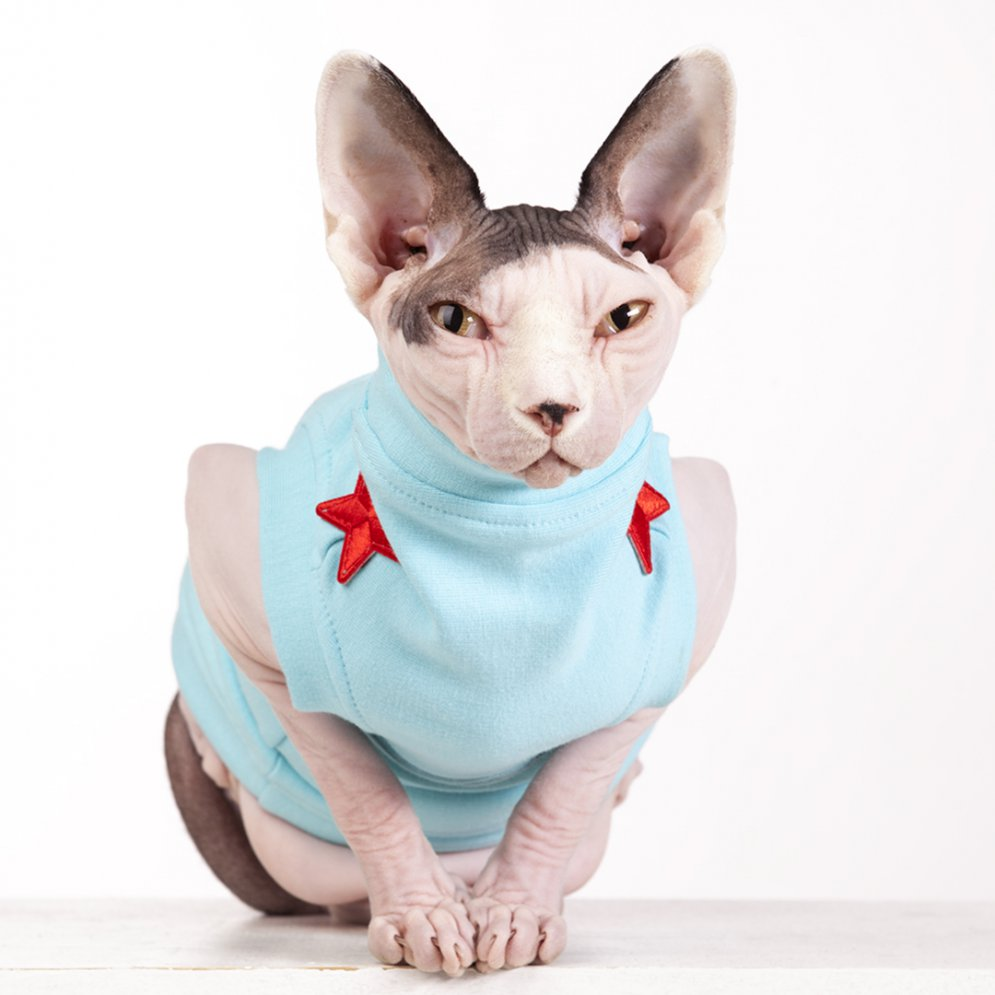 sphynx-cat-clothes-FleeceRockStar_7695-sphynx-cat-wear
