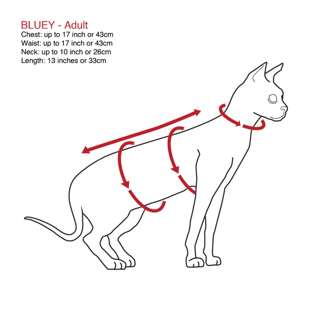 sphynx-cat-clothes-bluey-sphynx-cat-wear-size-chart