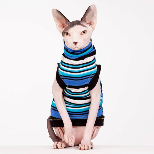 sphynx-cat-clothes-bluey-sphynx-cat-wear-0764