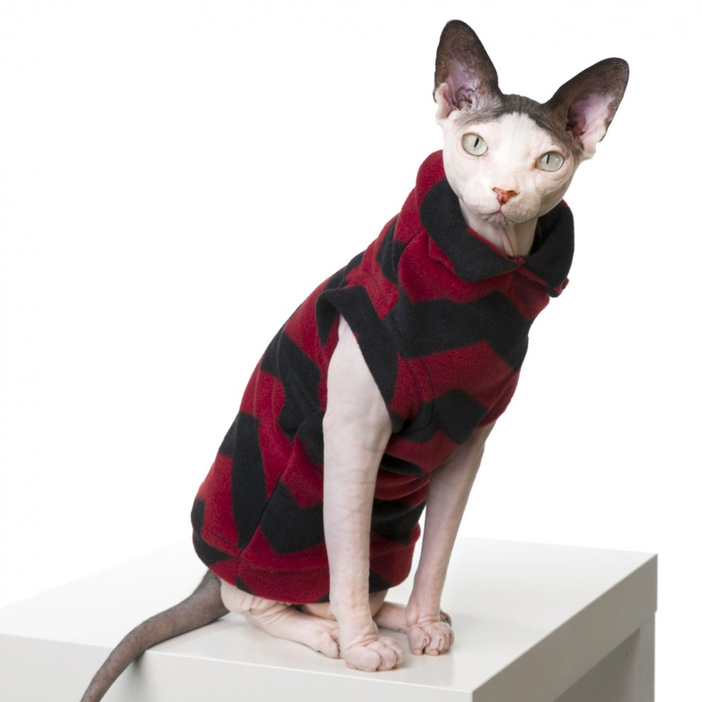 sphynx-cat-clothes-JugHead_178-sphynx-cat-wear