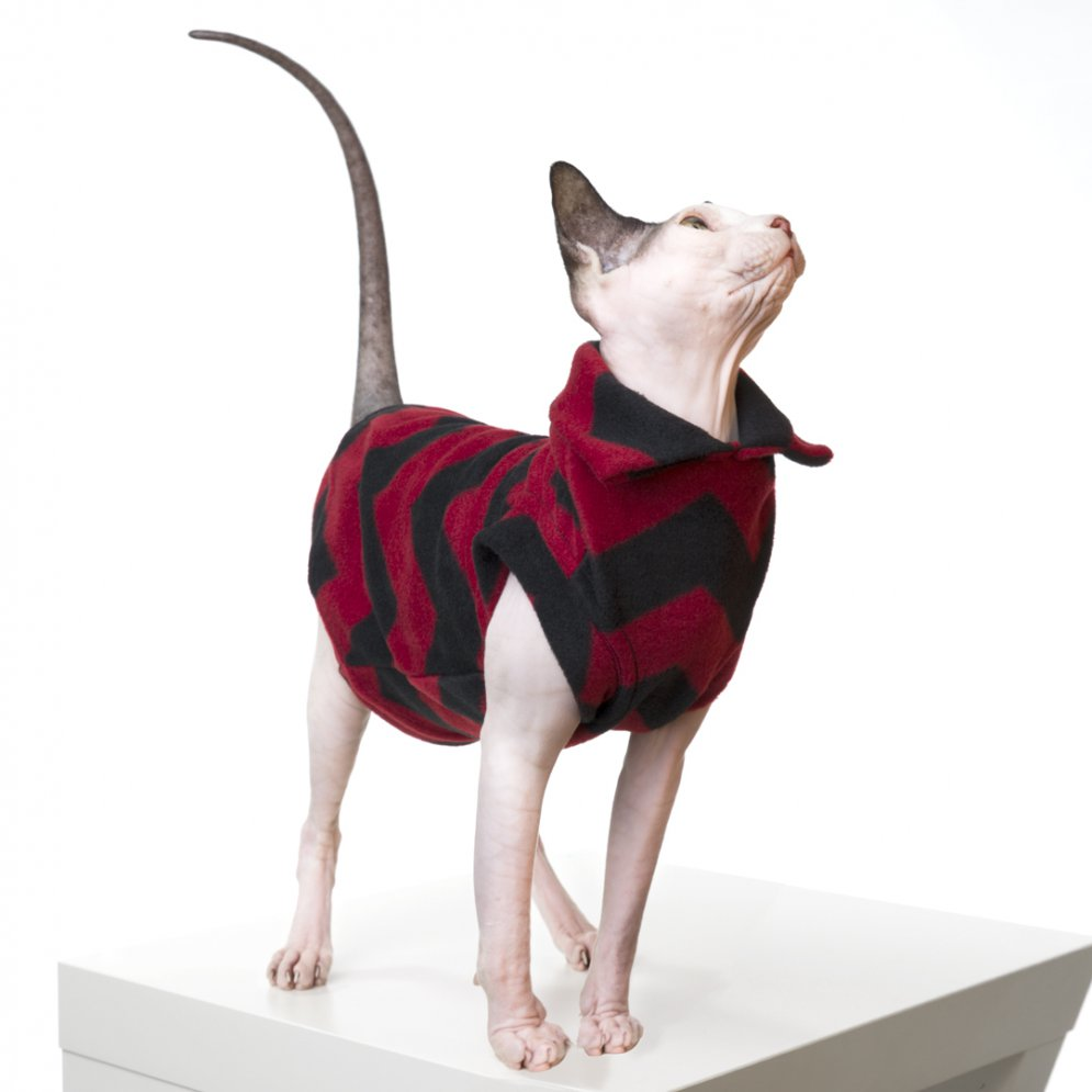 sphynx-cat-clothes-Jughead_143-sphynx-cat-wear