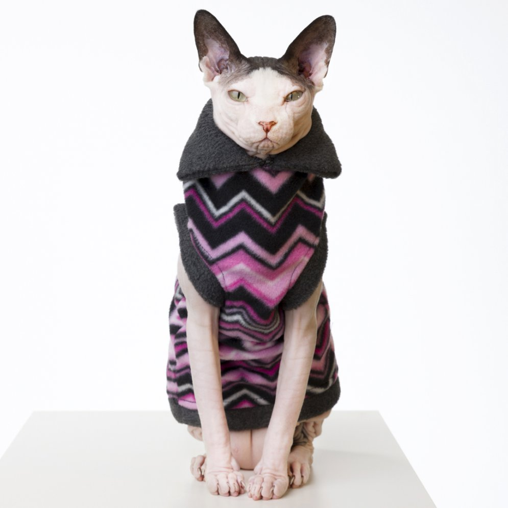 sphynx-cat-clothes-Pink Chevron_062-sphynx-cat-wear