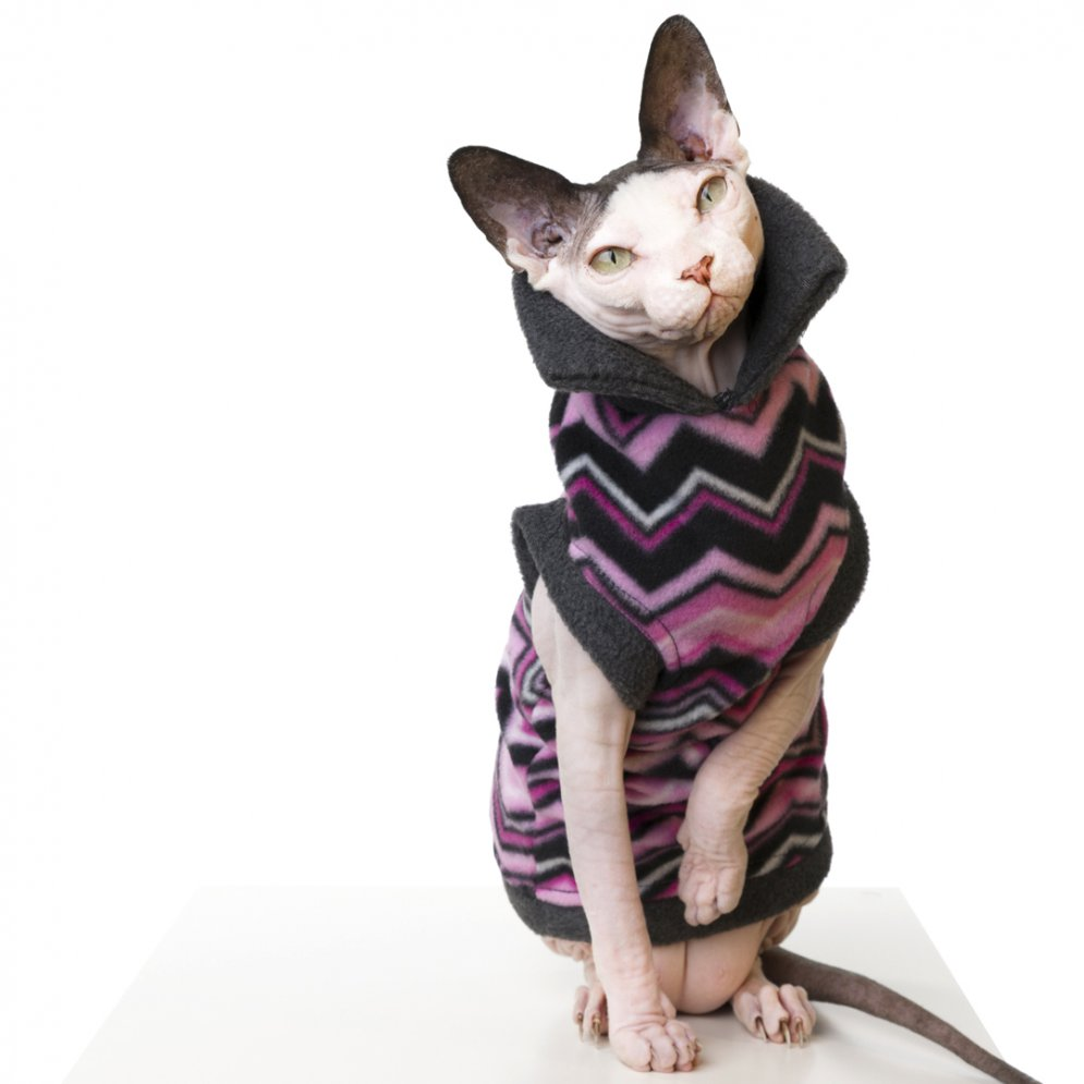 sphynx-cat-clothes-PinkChevron_066-sphynx-cat-wear