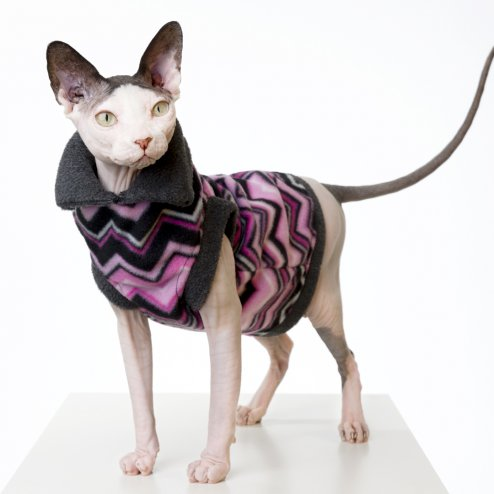 sphynx-cat-clothes-PinkChevron_092-sphynx-cat-wear