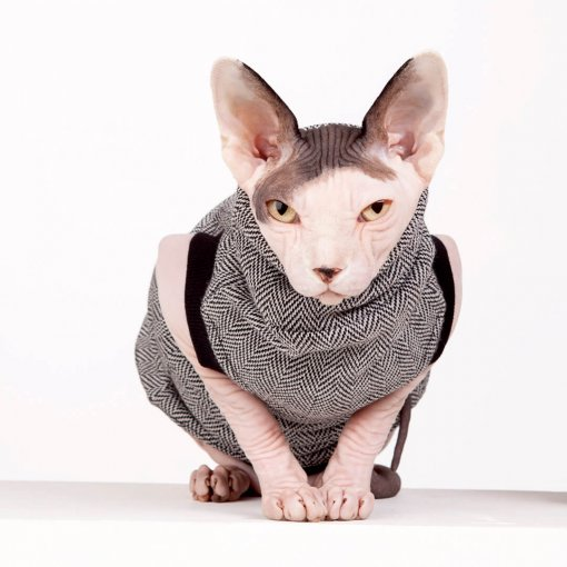 sphynx-cat-clothes-CEO-sphynx-cat-wear-_0796