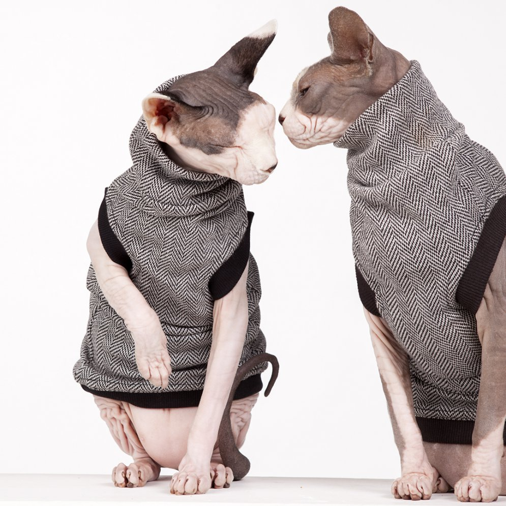 sphynx-cat-clothes-CEO-sphynx-cat-wear-_AD_0777