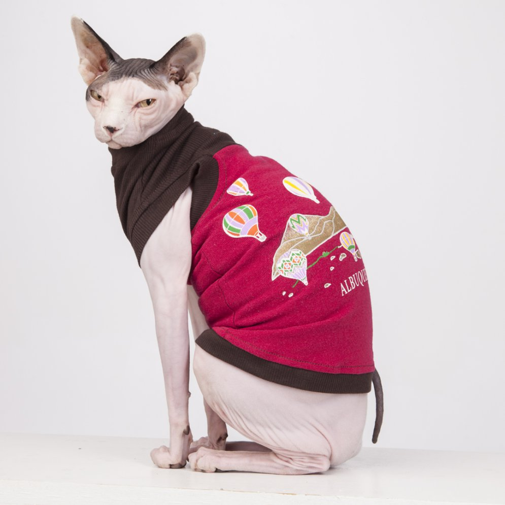 sphynx-cat-clothes-Alberquerque_6130-sphynx-cat-wear