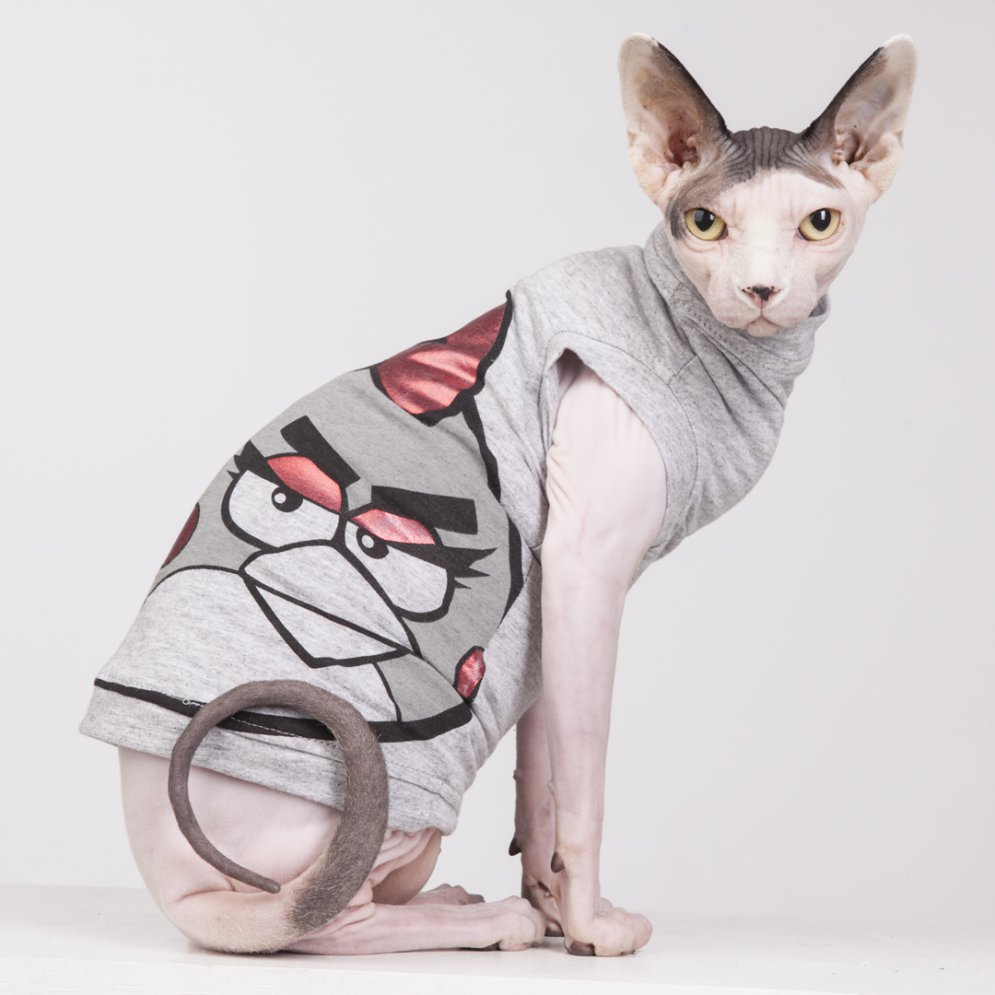 sphynx-cat-clothes-AngryBirds_6093-sphynx-cat-wear