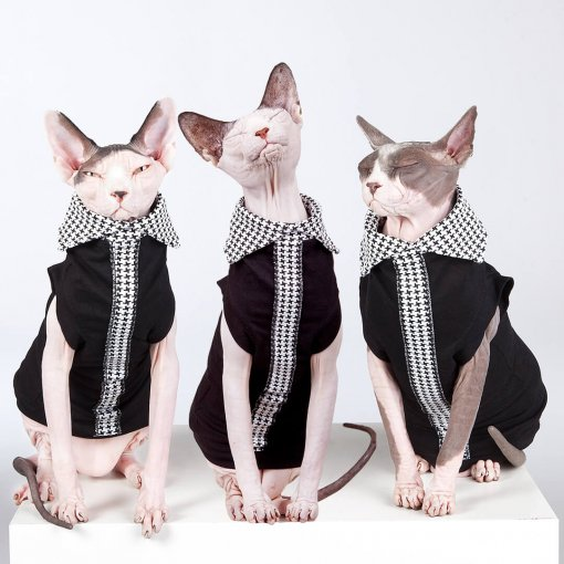 sphynx-cat-clothes-ExectutiveLimitedEdition_0568-sphynx-cat-wear