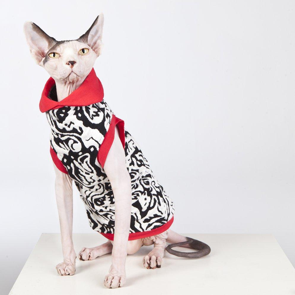 sphynx-cat-clothes-GayParis_0471-sphynx-cat-wear