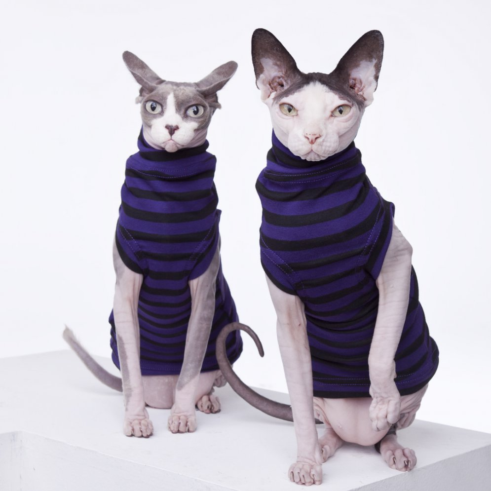 sphynx-cat-clothes-PURPLEPEOPLEEATER18283-sphynx-cat-wear