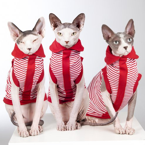 sphynx-cat-clothes-PeppermintTwistLimitedEdition_0516-sphynx-cat-wear