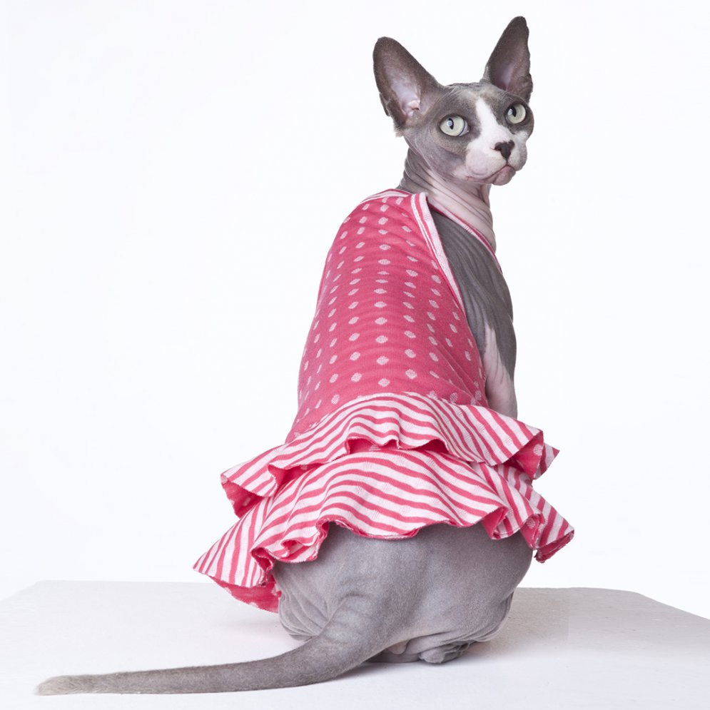 sphynx-cat-clothes-PinkLemonade-sphynx-cat-wear
