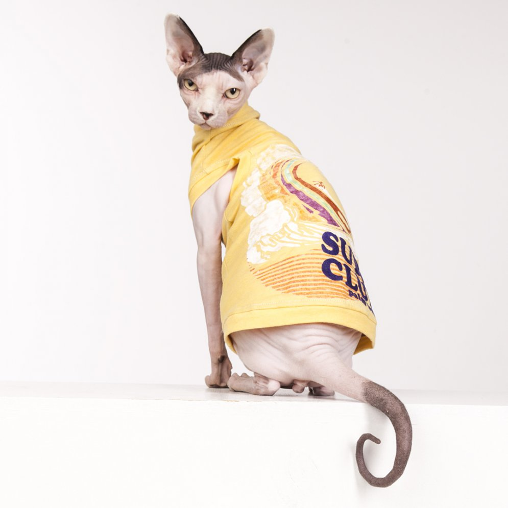 sphynx-cat-clothes-SurfClubAd_7318-sphynx-cat-wear