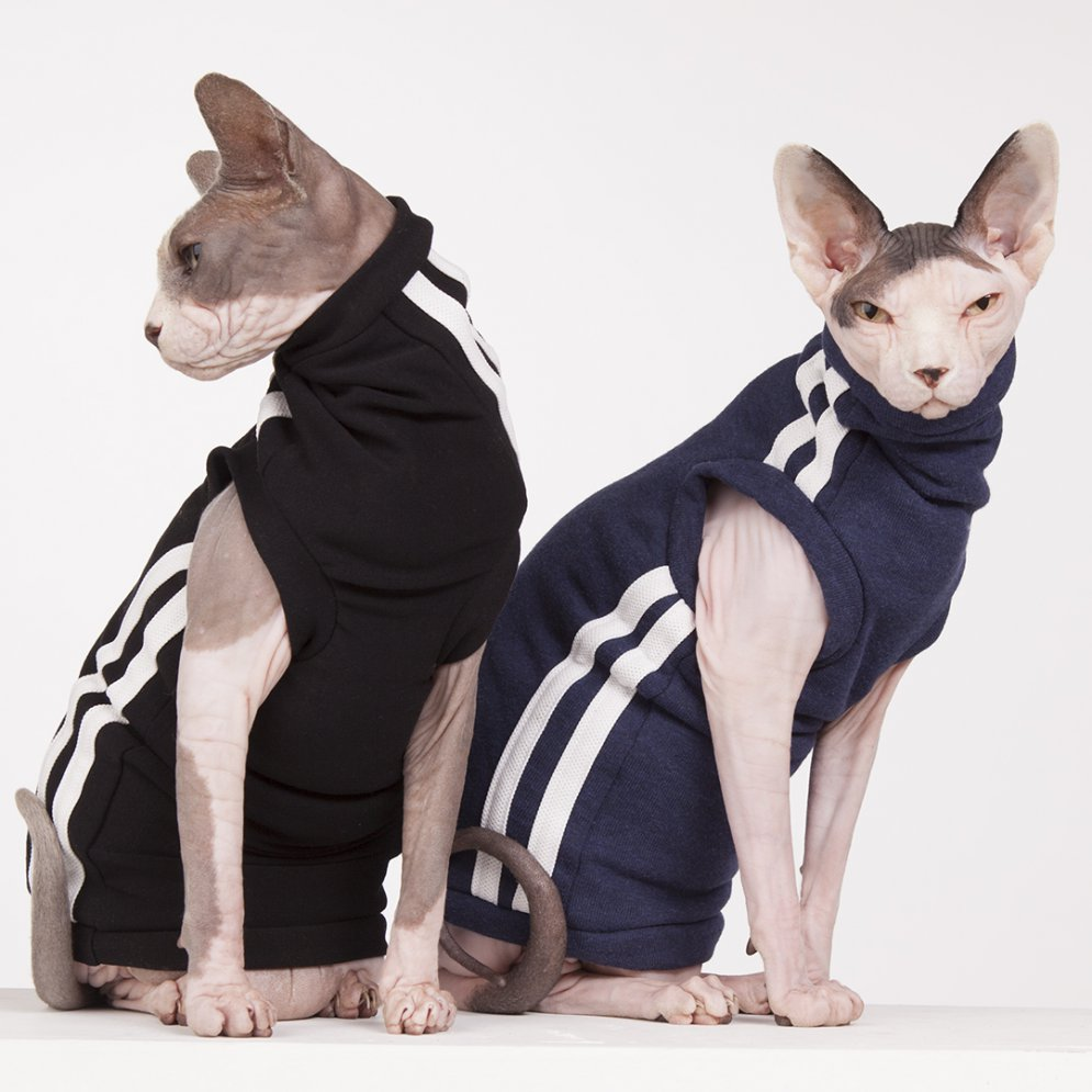 sphynx-cat-clothes-TrackDuo_0901-sphynx-cat-wear
