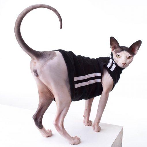 sphynx-cat-clothes-TrackSuitBlack_1605-sphynx-cat-wear