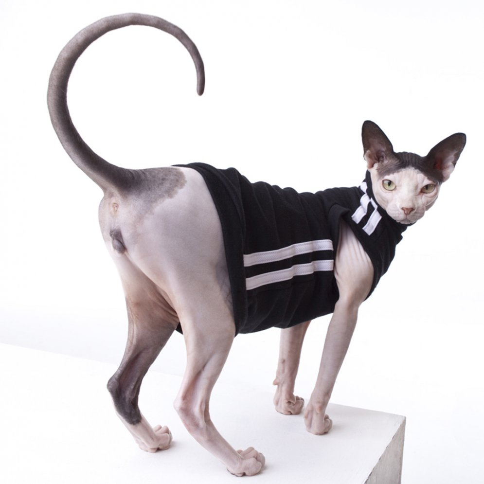 sphynx-cat-clothes-TrackSuitBlack_1605-sphynx-cat-wear