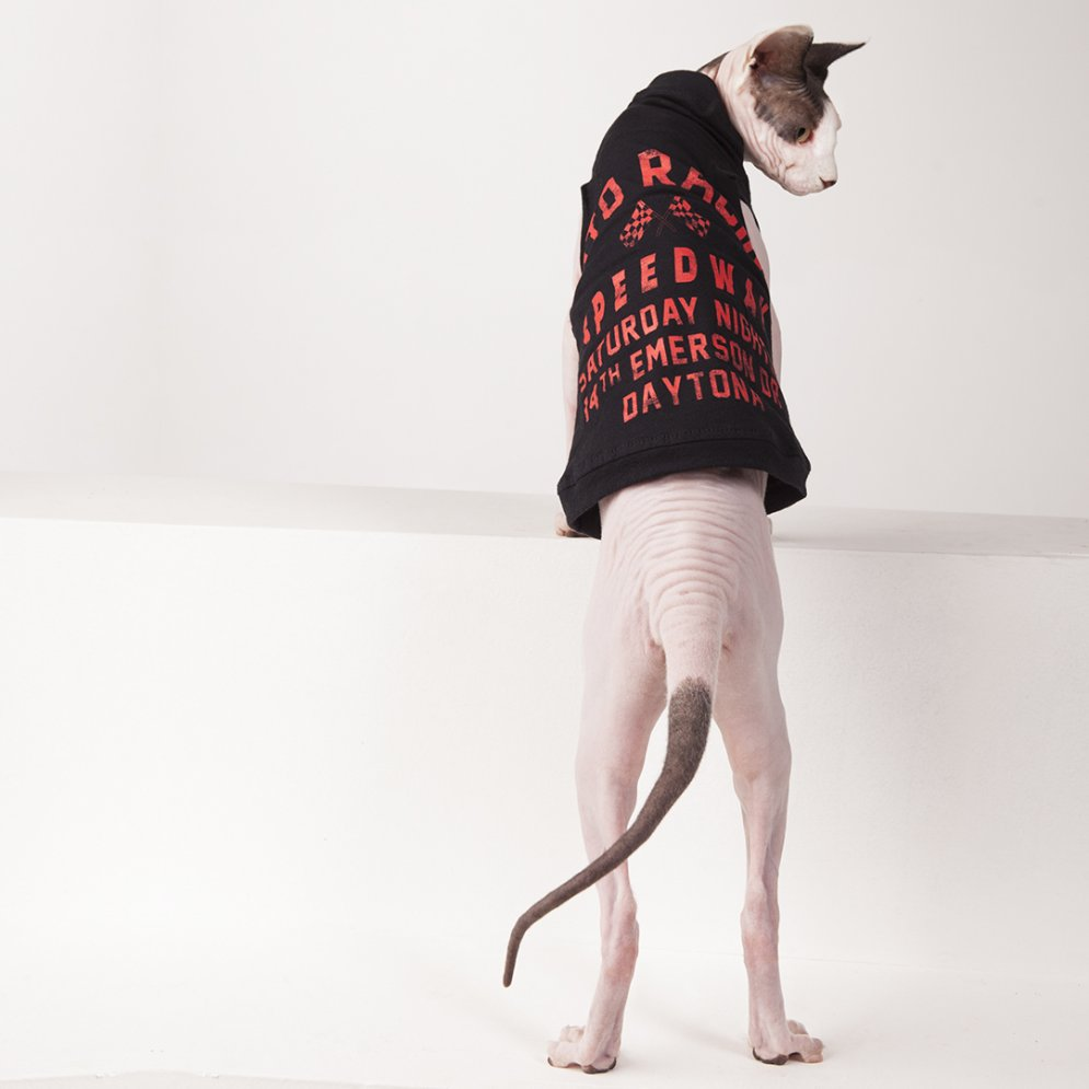 sphynx-cat-clothes-Daytona-2-sphynx-cat-wear