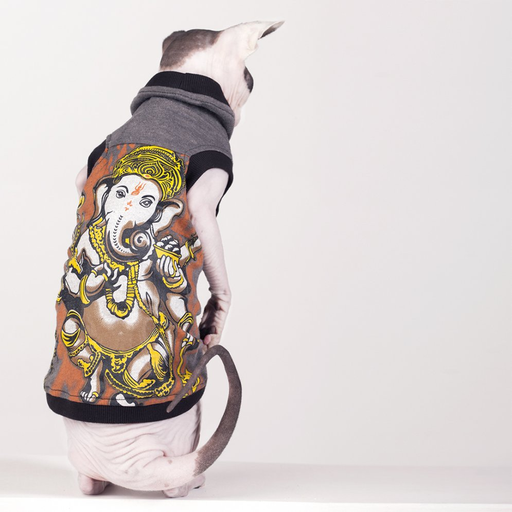 sphynx-cat-clothes-Ganesh-3983-sphynx-cat-wear