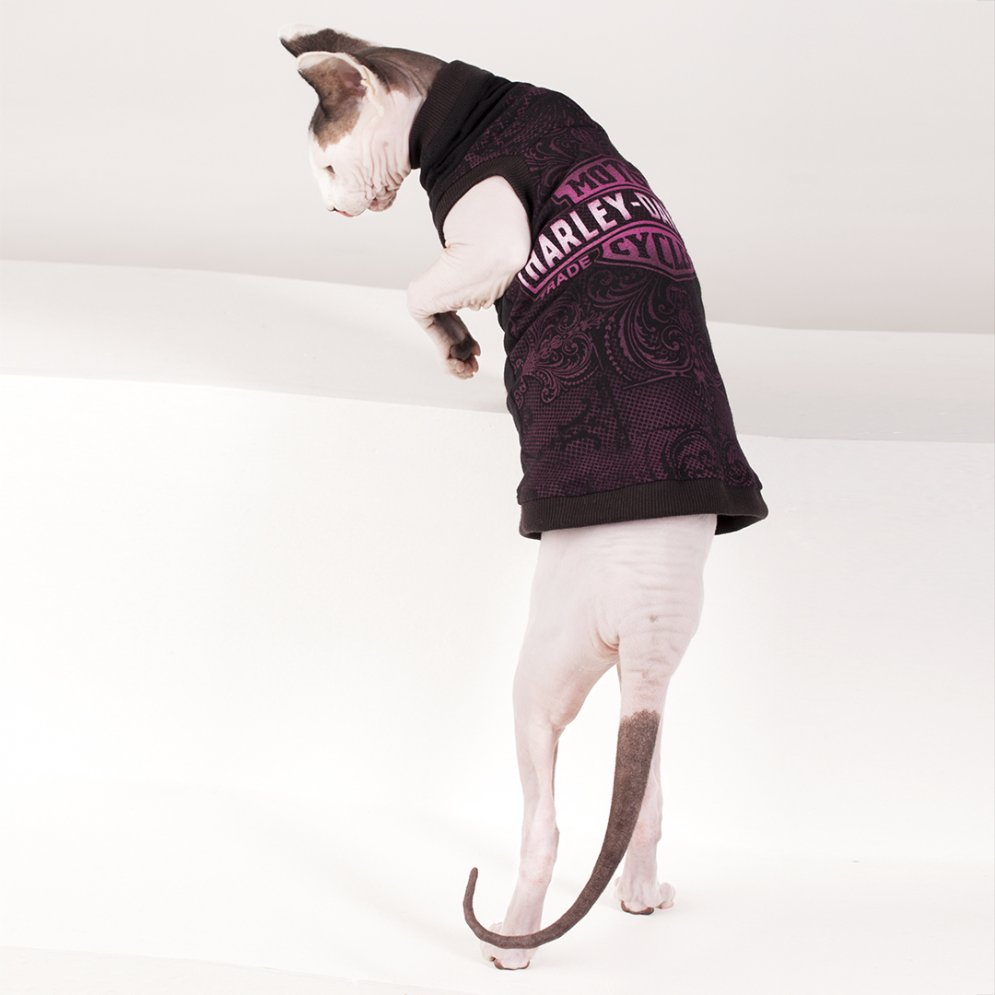 sphynx-cat-clothes-Harley-Davidson-3937-sphynx-cat-wear