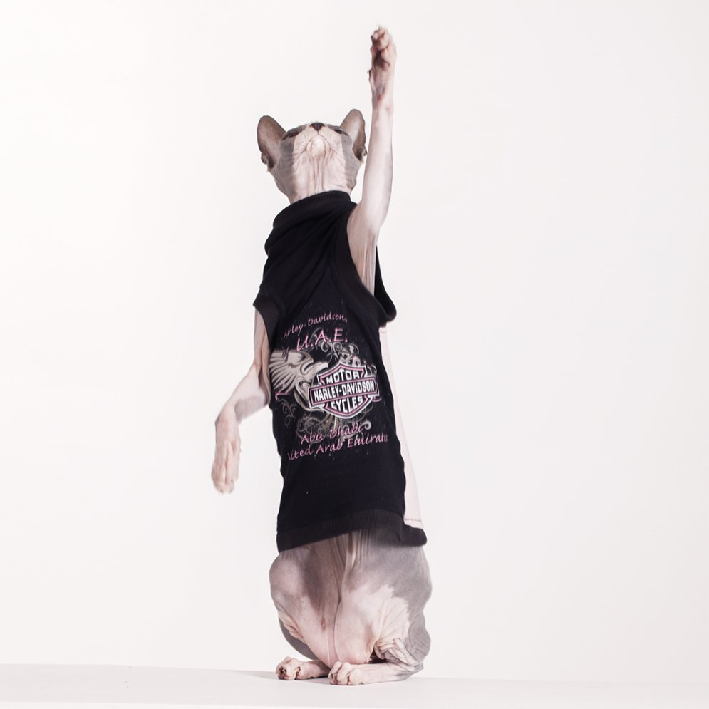 sphynx-cat-clothes-UAE-Harley-3969-sphynx-cat-wear