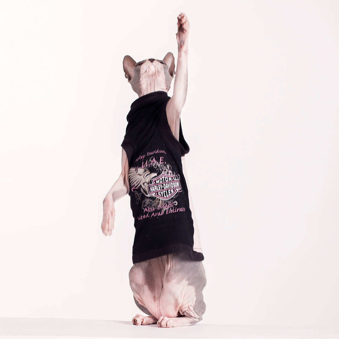 Sphynx Cat Shirts Pop Culture Vintage Recycled Sphynx