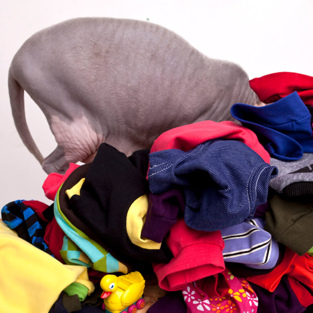 sphynx-cat-clothes-home-pile-sphynx-cat-wear