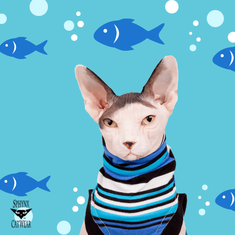 sphynx-cat-clothes-home-bluey-sphynx-cat-wear