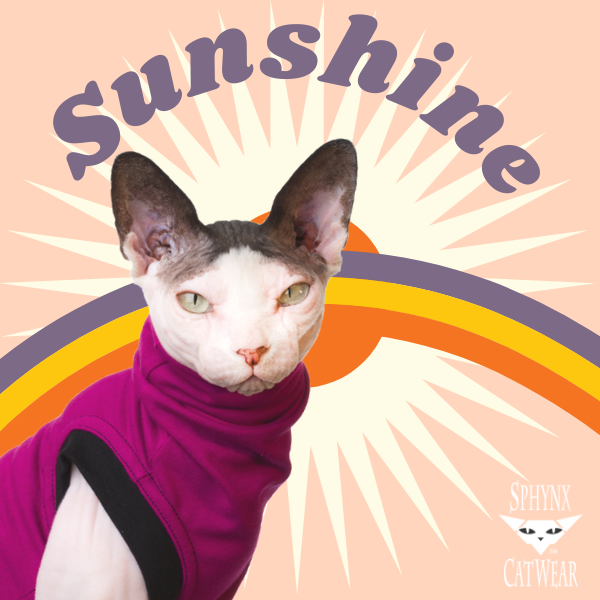 sphynx-cat-clothes-home-sunshine-sphynx-cat-wear