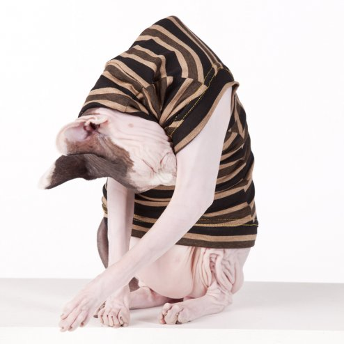 sphynx-cat-clothes-cappuccino-sphynx-cat-wear