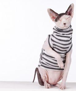 sphynx-cat-clothes-felixx-sphynx-cat-wear