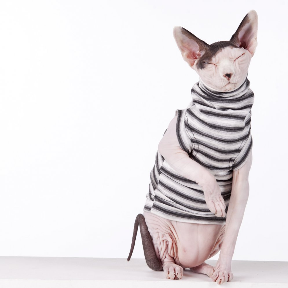 sphynx-cat-clothes-felixx-sphynx-cat-wear