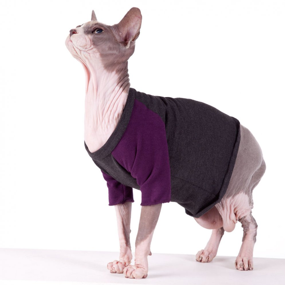 sphynx-cat-clothes-Vintage-TBall-Grape-sphynx-cat-wear
