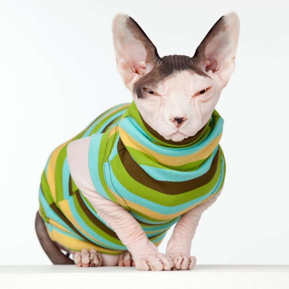 sphynx-cat-clothes-Kiwi-sphynx-cat-wear