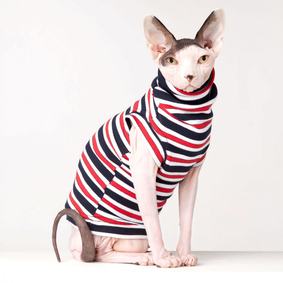 sphynx-cat-clothes-Catamaran-sphynx-cat-wear