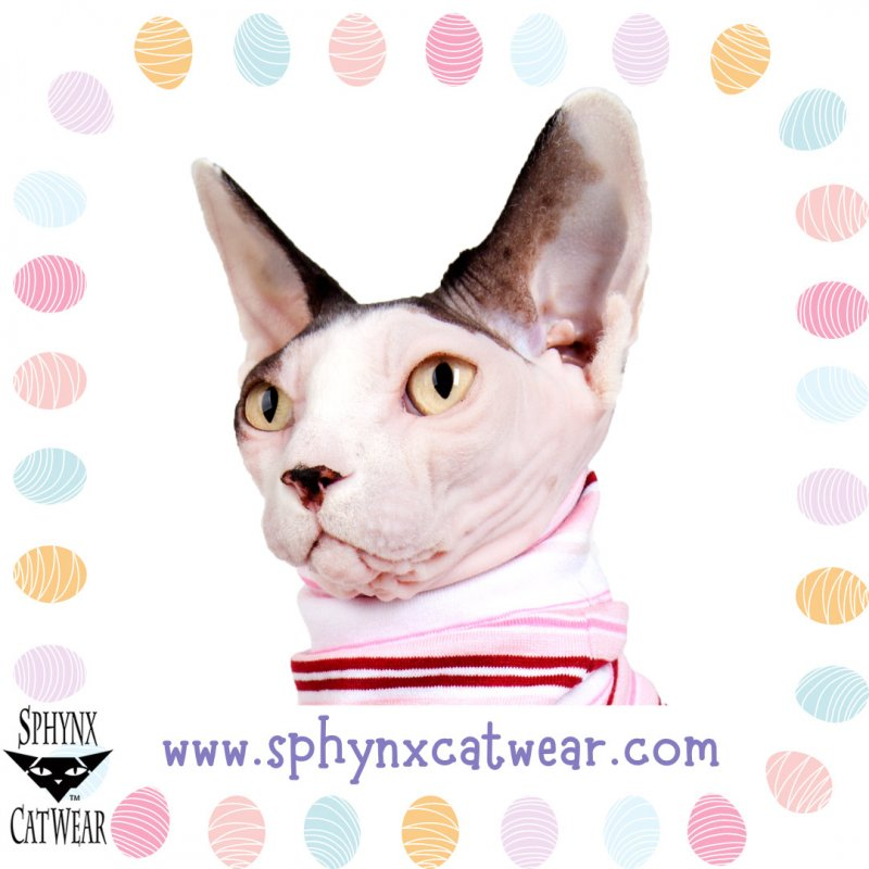 sphynx-cat-clothes-easter-sphynx-cat-wear